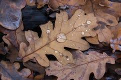 Gocce di autunno Fotografia Stock