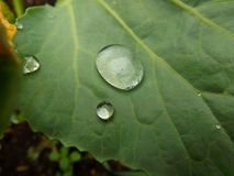 Gocce di pioggia Fotografia Stock Libera da Diritti