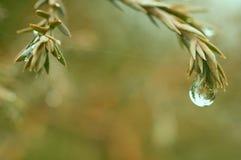 Gocce di pioggia all'estremità dei rami Fotografie Stock