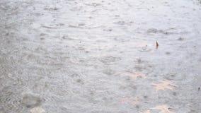 Gocce di pioggia che cadono una grande pozza su asfalto urbano nel maltempo di estate archivi video