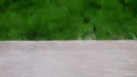 Gocce di pioggia che spruzzano nel giardino stock footage