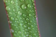 Gocce di pioggia del fiore Immagine Stock