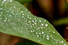 Gocce di pioggia dell'acqua pulita su una foglia fotografie stock