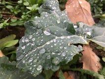 Gocce di pioggia e foglia verde immagini stock