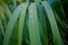 Gocce di pioggia a gioco sullo scorrevole del ` delle nature fotografia stock