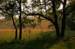 Gocce di pioggia nella foresta un giorno pieno di sole Fotografia Stock