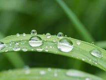 Gocce di pioggia su erba Fotografia Stock