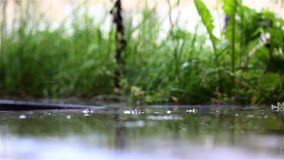 Gocce di pioggia su terra riflettente nell'erba video d archivio