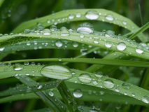 Gocce di pioggia su un'erba Fotografia Stock Libera da Diritti