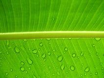 Gocce di pioggia su un foglio Fotografia Stock
