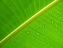 Gocce di pioggia su un foglio Fotografie Stock