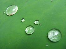 Gocce di pioggia su un foglio Fotografia Stock Libera da Diritti