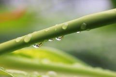 Gocce di pioggia su un ramo della pianta Immagine Stock Libera da Diritti