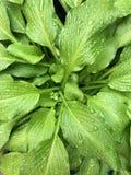 Gocce di pioggia su una pianta Immagini Stock Libere da Diritti