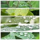 Gocce di pioggia sul collage delle foglie Immagini Stock Libere da Diritti