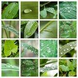 Gocce di pioggia sul collage delle foglie Immagine Stock Libera da Diritti