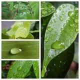 Gocce di pioggia sul collage delle foglie Fotografia Stock Libera da Diritti