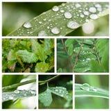 Gocce di pioggia sul collage delle foglie Immagini Stock