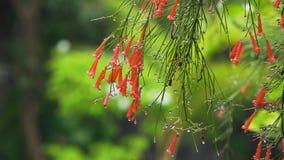 Gocce di pioggia sul fiore fotografia stock libera da diritti