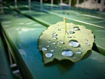 Gocce di pioggia sul foglio Immagine Stock