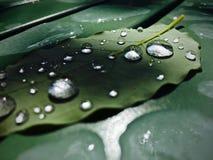 Gocce di pioggia sul foglio Fotografie Stock Libere da Diritti