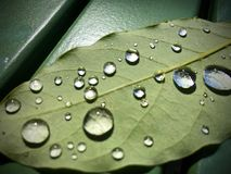 Gocce di pioggia sul foglio Immagini Stock Libere da Diritti