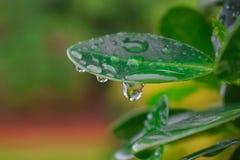 Gocce di pioggia sul foglio verde Fotografie Stock