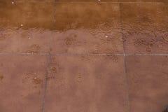 Gocce di pioggia sul pavimento marrone Fotografia Stock Libera da Diritti