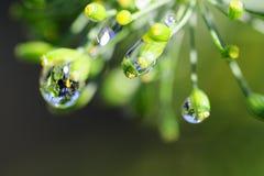 Gocce di pioggia sul raccolto dell'aneto fotografie stock libere da diritti