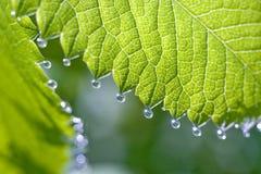 Gocce di pioggia sul tiro fresco Immagine Stock