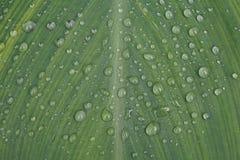gocce di pioggia sulla foglia Fotografie Stock