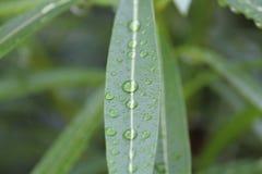 gocce di pioggia sulla foglia Fotografie Stock Libere da Diritti