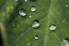 Gocce di pioggia sulla foglia verde immagini stock
