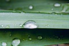 Gocce di pioggia sulla foglia verde, fondo astratto 1 della natura Immagini Stock