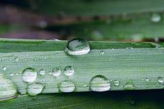 Gocce di pioggia sulla foglia verde, fondo astratto 2 della natura Fotografia Stock