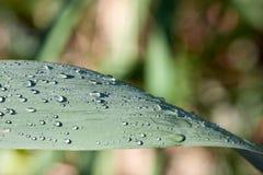 Gocce di pioggia sulla lancia Fotografia Stock
