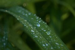 Gocce di pioggia sulla pianta immagine stock libera da diritti