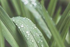 Gocce di pioggia sulla piccola pianta dopo una tempesta di pioggia Immagini Stock Libere da Diritti