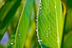 Gocce di pioggia sulle foglie dopo pioggia fotografie stock libere da diritti