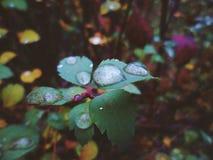 Gocce di pioggia sulle foglie nella foresta Immagine Stock Libera da Diritti