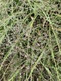 Gocce di pioggia sulle lame di erba fotografia stock libera da diritti