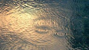 Gocce di pioggia sullo stagno di acqua che hanno effetto dell'onda dell'ondulazione fotografia stock libera da diritti