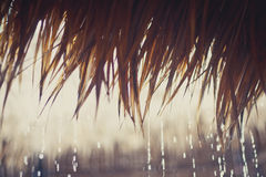 Gocce di pioggia tropicali su un tetto a lamella Fotografia Stock