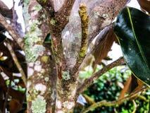 Gocce di pioggia in una ragnatela Immagini Stock
