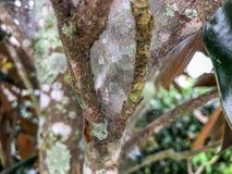 Gocce di pioggia in una ragnatela Fotografia Stock Libera da Diritti