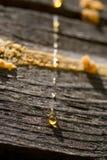 Gocce di resina sulla parete di legno Fotografia Stock