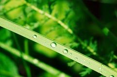 Gocce di rugiada Fotografia Stock