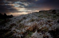 Gocce di rugiada al tramonto Fotografia Stock