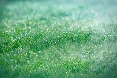 Gocce di rugiada di mattina su erba Immagini Stock Libere da Diritti