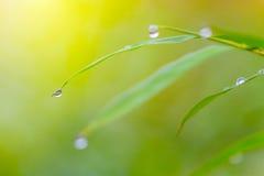 Gocce di rugiada di mattina sulle foglie verdi Fotografia Stock Libera da Diritti